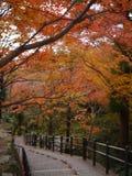 Höst på Kiyomizu Dera Temple Arkivfoto