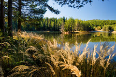 Höst på sjön Fotografering för Bildbyråer