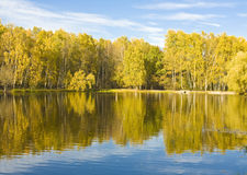 Höst, sjö och björkskog Arkivfoto