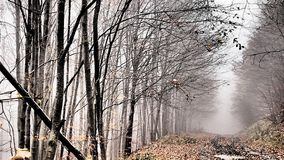 Höst skog, dimma som förbluffar Royaltyfri Foto