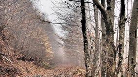 Höst skog, dimma som förbluffar Royaltyfri Bild