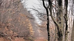 Höst skog, dimma som förbluffar Fotografering för Bildbyråer