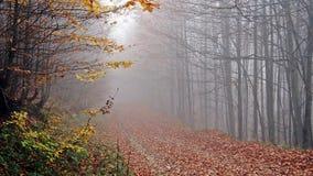 Höst skog, dimma som förbluffar Royaltyfri Fotografi