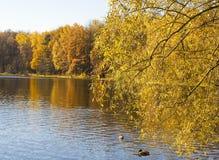 Höst, skog och sjö Arkivfoto