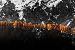 Höst stråle av ljus på träden Royaltyfri Foto