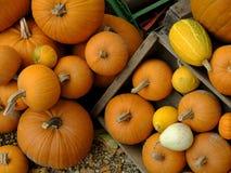 Höst - tacksägelsefest - allhelgonaafton - ge sig för tack: en färgglad ordning av pumpa, märg, gourdes och andra royaltyfri foto