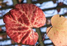 Höst Time Färgrik trädgård i Warszawa guld- polermedel för höst royaltyfri bild