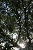 Höst tre Royaltyfria Bilder
