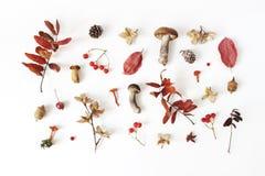 Höst utformad botanisk ordning Sammansättning av champinjoner, ekollonar, sörjer kottar, bokollonar, färgrika torkade sidor arkivfoton