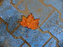 höst vinter, orange blad Arkivfoton