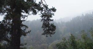 Höst-vinter saga i bergen, Transcarpatia, Ukraina stock video