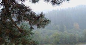 Höst-vinter saga i bergen, Transcarpatia, Ukraina arkivfilmer