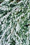 Höst-/vintersidor som täckas i ottajordfrost Arkivfoto