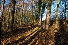 Höst woodland2 Arkivfoto