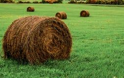 Höstack i grönt fält Royaltyfria Bilder