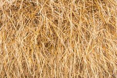 Höstack kärve av torrt gräs, hö, sugrör, textur, abstrakt bakgrund arkivfoto