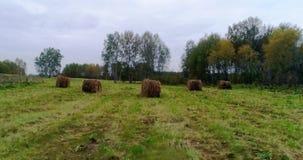 Höstackar i björkskog i en röjning lager videofilmer