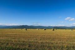 Höstackar på det jordbruks- fältet Altai Ryssland arkivfoto