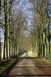 höstavenybokträd royaltyfria bilder