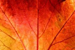 höstbakgrund Fotografering för Bildbyråer