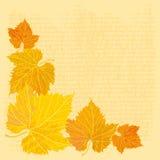 höstbakgrund Royaltyfria Bilder
