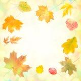 Höstbakgrund 009 Royaltyfria Bilder