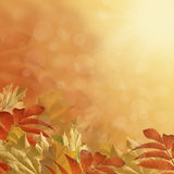 Höstbakgrund Arkivbild