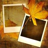 höstbakgrund Arkivbilder
