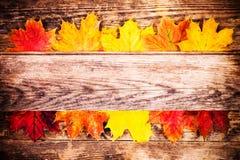 Höstbakgrund, färgrika trädsidor Royaltyfri Bild