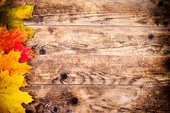 Höstbakgrund, färgrika trädsidor Arkivbild
