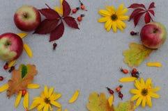 Höstbakgrund med ettträd för texten Royaltyfria Foton