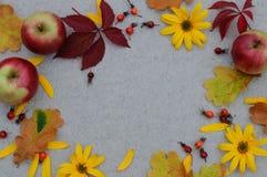 Höstbakgrund med ettträd för texten Royaltyfri Foto