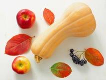 Höstbakgrund med hel pumpa, färgrika höstsidor och röda äpplen Tacksägelsesammansättning med butternutsquash arkivbild
