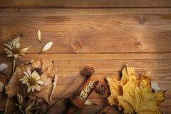 Höstbakgrund med kryddor, torkade blommor, kopierar stället för ins Arkivfoto