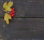 Höstbakgrund med plank och bär av viburnumen Royaltyfri Fotografi