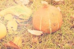 Höstbakgrund med säsongsbetonade höstpumpor, äpplen och päron på bakgrund av höstsidor och gräs arkivbilder