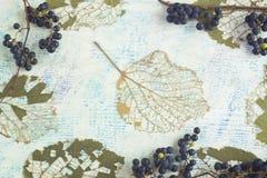 Höstbakgrund med skelett- sidor och lösa druvor arkivbilder