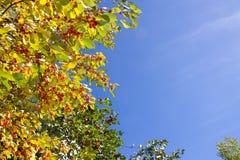 höstbakgrundsbluen låter vara skyen Arkivfoto