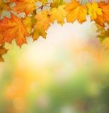 höstbakgrundscloseupen colors orange red för murgrönaleaf Fotografering för Bildbyråer