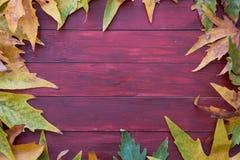 höstbakgrundscloseupen colors orange red för murgrönaleaf Arkivfoto