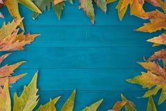 höstbakgrundscloseupen colors orange red för murgrönaleaf Arkivfoton