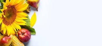 höstbakgrundscloseupen colors orange red för murgrönaleaf Gräns av solrosen, havre och päron royaltyfria bilder