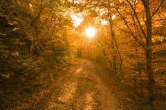 Höstbana i skogen Arkivbild