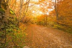 Höstbana i skogen Royaltyfria Foton