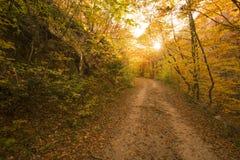 Höstbana i skogen Arkivfoto