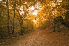 Höstbana i skogen Fotografering för Bildbyråer
