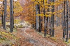 Höstbana till och med skogen royaltyfri fotografi