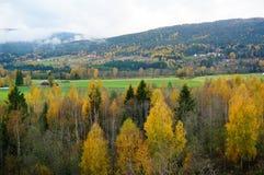 Höstberg och skogar i Telemark, Norge Arkivbilder