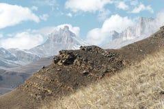 Höstberglandskapet av gulnat lutningar och gräs i bergen med epos vaggar och särar av snö-täckte lutningar royaltyfri fotografi