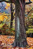 Höstbild, ensamt träd Arkivbild